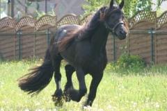 pferde_4_20140707_1035823659